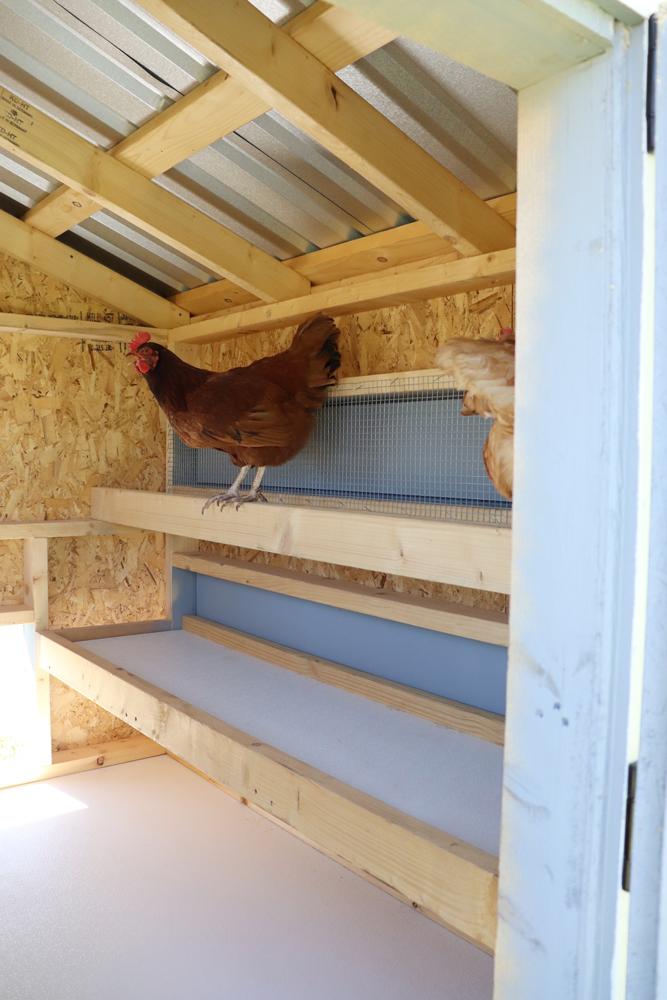 Farm+Yard-5x6-Brahma-Chicken-Coop-2