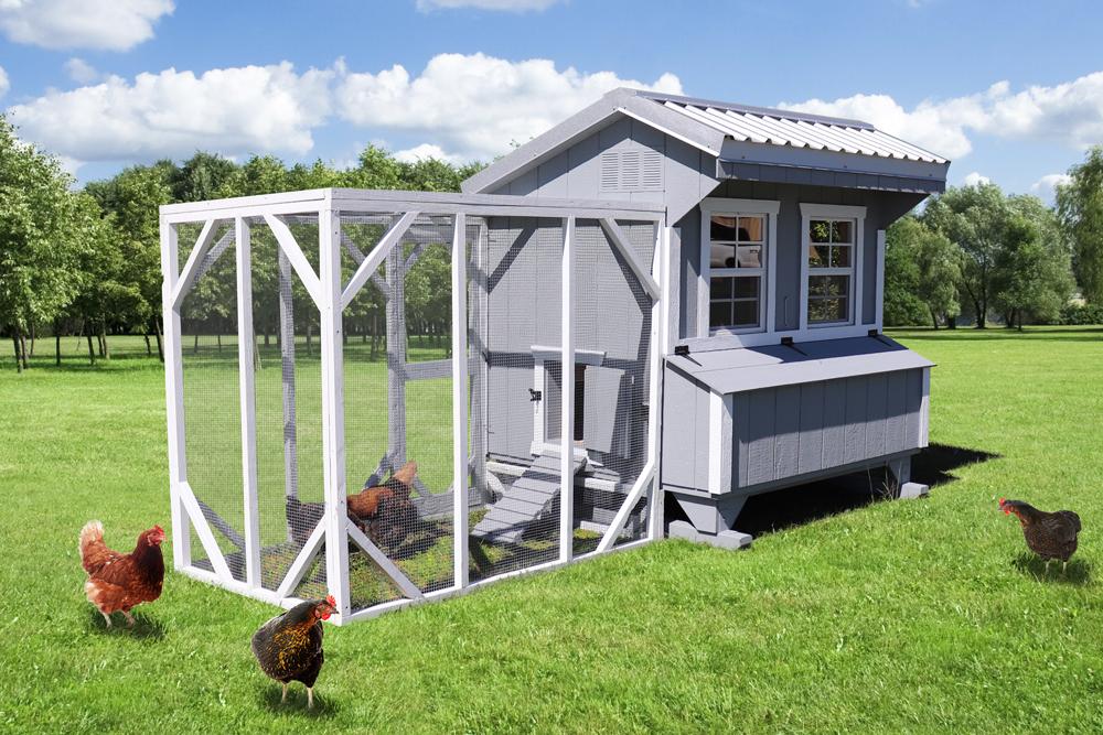 Farm+Yard-5x6-Brahma-Chicken-Coop-5