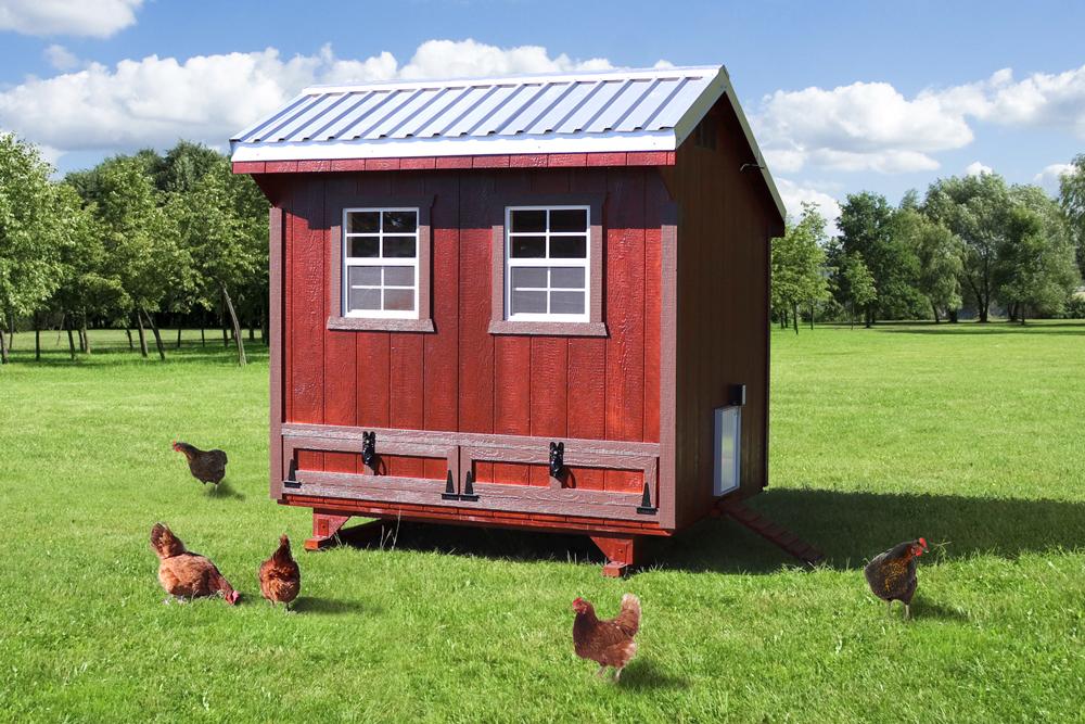 Farm+Yard-6x8-Plymouth-Chicken-Coop-3