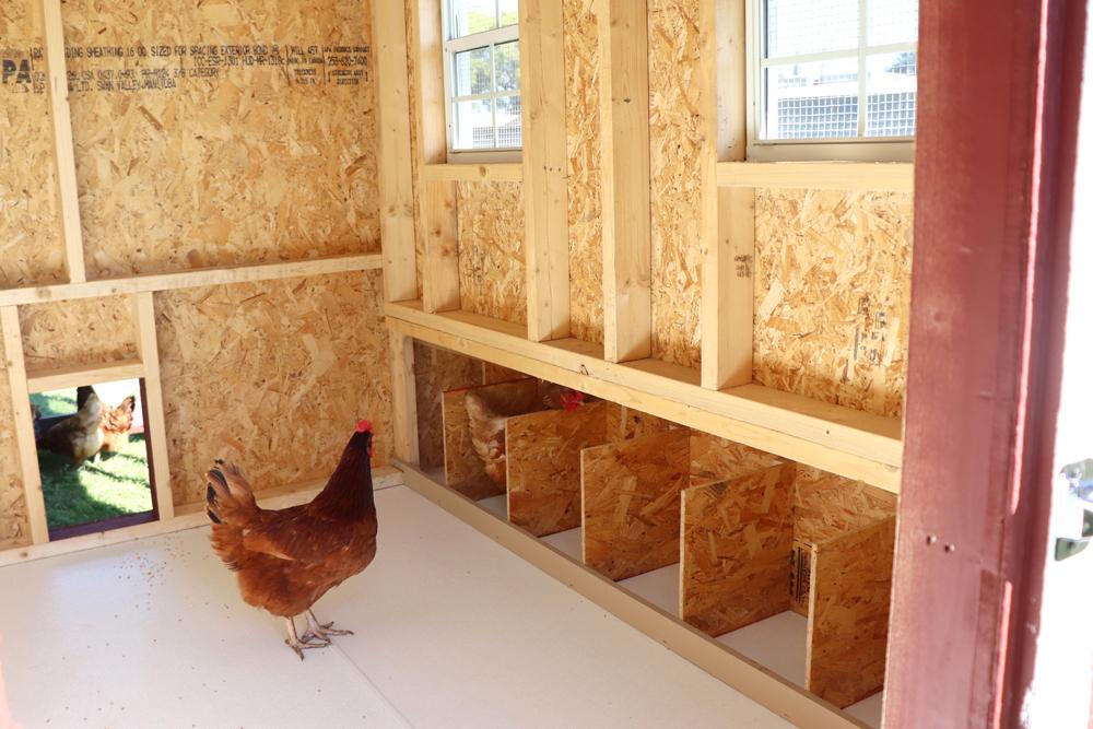 Farm+Yard-7x8-Brahma-Chicken-Coop-5