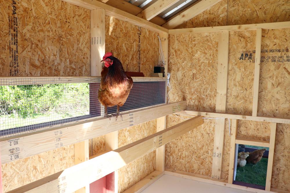 Farm+Yard-7x8-Brahma-Chicken-Coop-8