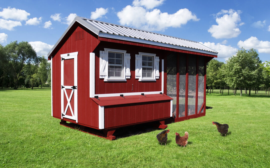 How to Keep Chickens Happy and Healthy