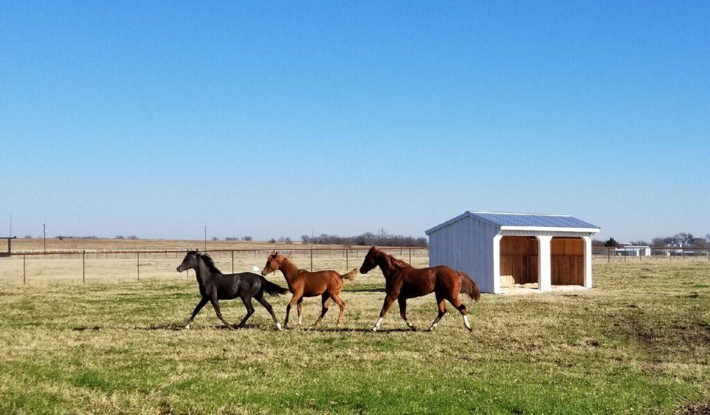 horse barn_Farm+Yard